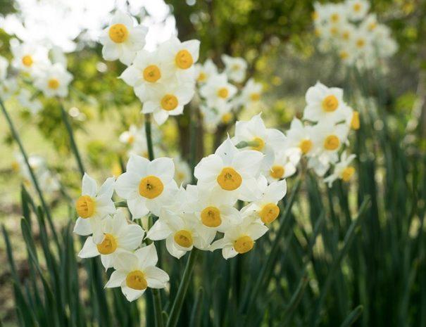 Primavera all'Agriturismo Sirimagus