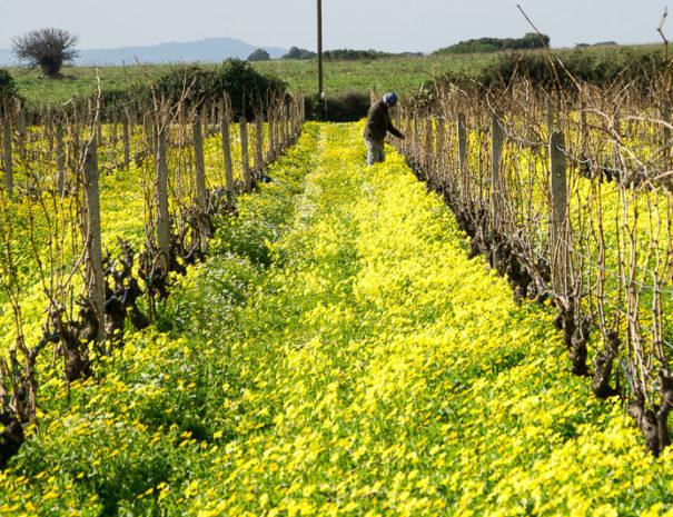vitigno all'Agriturismo Sirimagus